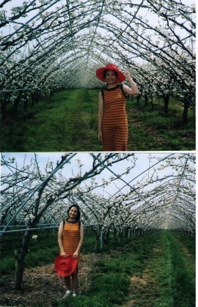 pic1_crop